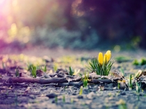 Spring-Photography-Wallpaper