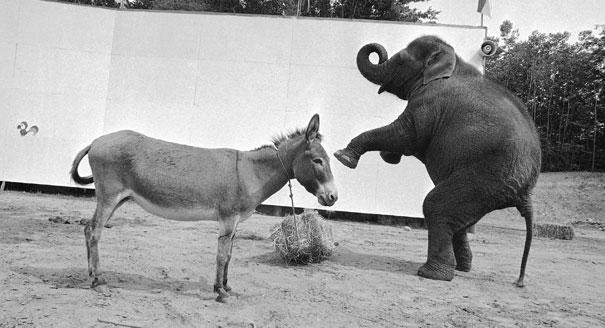 120705_donkey_elephant_ap_328